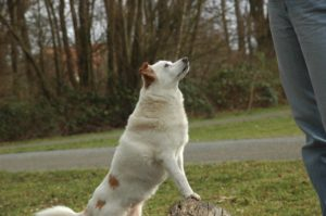 Hundeführerschein