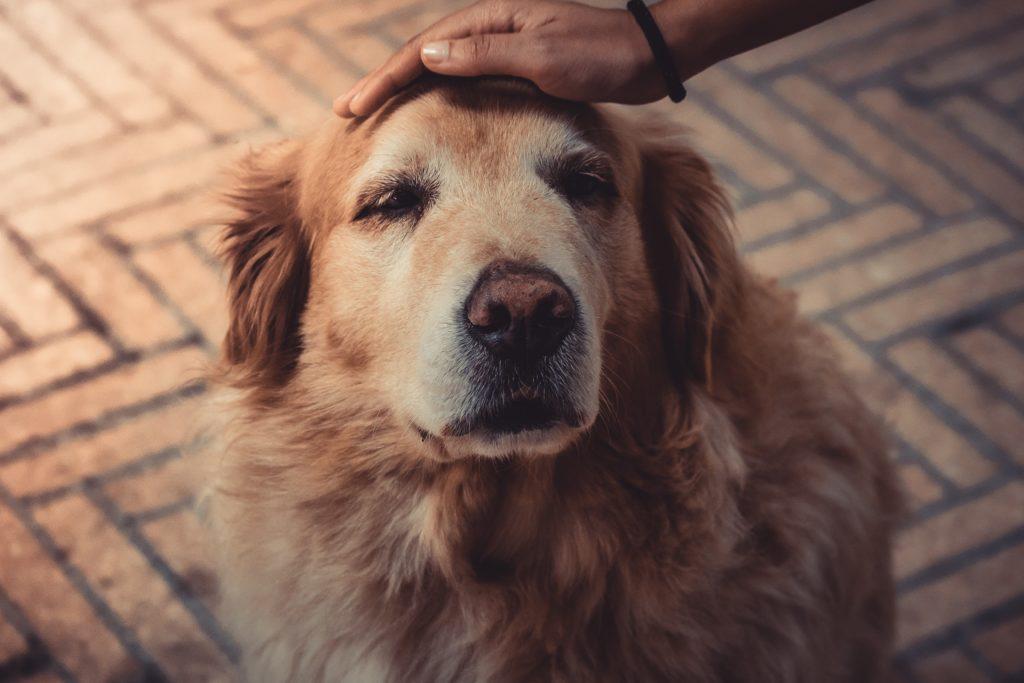 Ein Hund kommt ins Haus