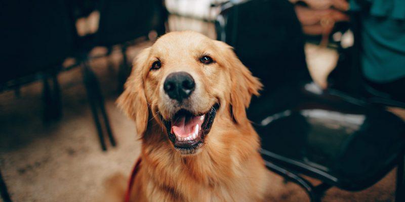 Hundmenschteam Hannover Leistungen